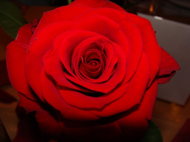 rote Rose von bmjj85