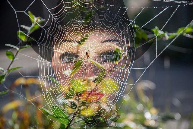 Im Netz der Spinne von Bronco (1)