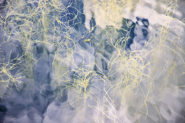 Wasserkunst von Chris Walu