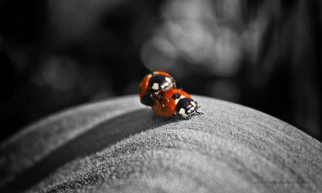 Planet of ladybugs von Artlines
