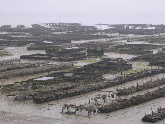 Austernfarm vor Cancale von John Catley