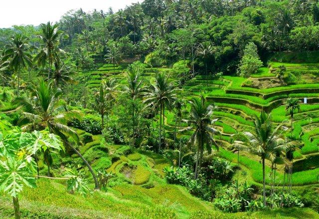 Wunderbare Reisterassen auf Bali 3 von RüdigerLinse