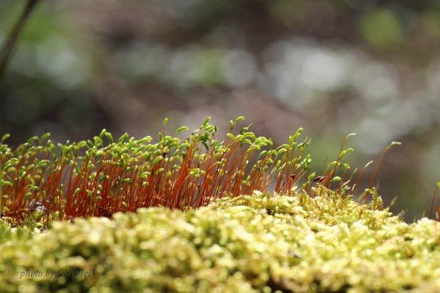 Miniwald von foto-chris