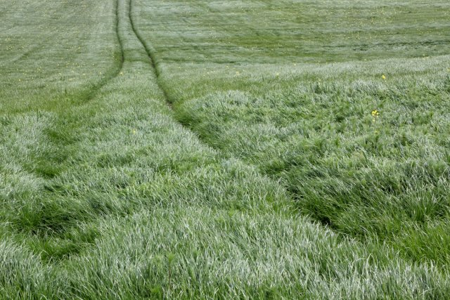 Grasland von Reiner von der Schlei