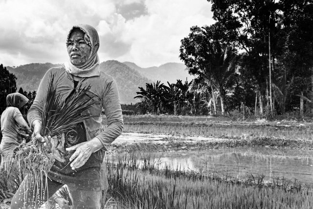 Reisanbau Sumatra 5 von Andrea Künstle