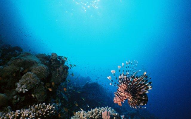 Rotfeuerfisch von scubby02