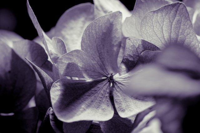 alte Blumen von Grabownik
