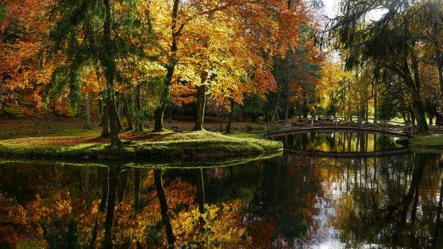 Goldener November von snuecke