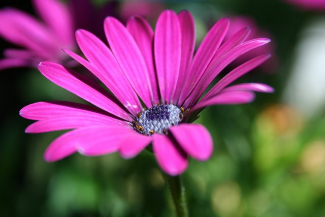 Blume von pmb00