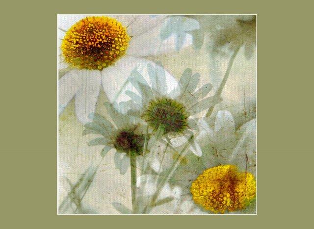 Blütenträumerei von Didjeh
