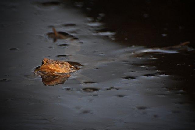 neulich am Teich von Riccarda-2404