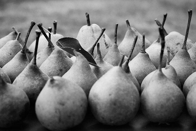 Birnen von Tom Icke