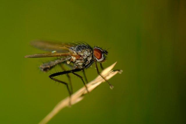 Unbekanntes Insekt von ek3108
