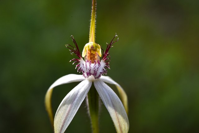 wildflower von muscipulaa
