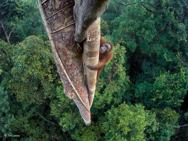 Wildlife Photographer of the Year 2016: Die Gewinnerbilder