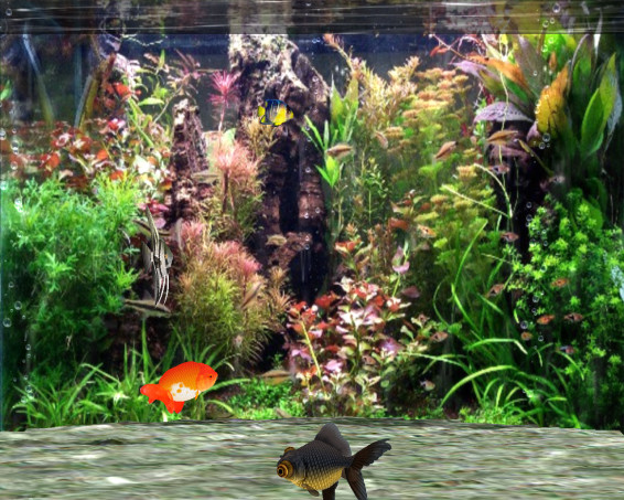 Fantastic 3D Fish Aquarium