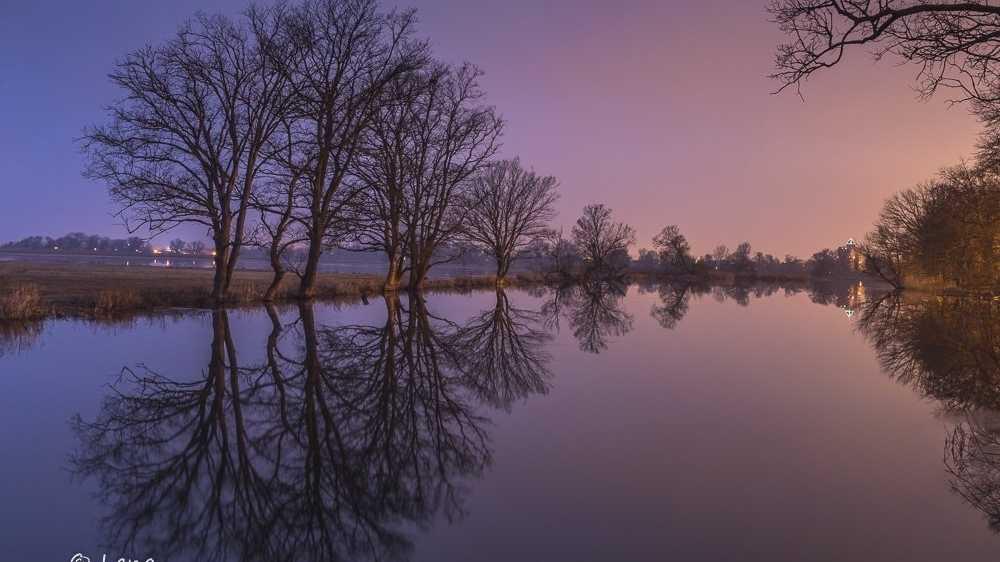 Polderwiese an der Oder