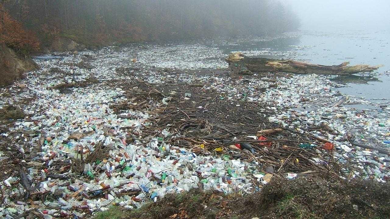Biologisch abbaubare Plastiktüten nach drei Jahren nicht verrottet