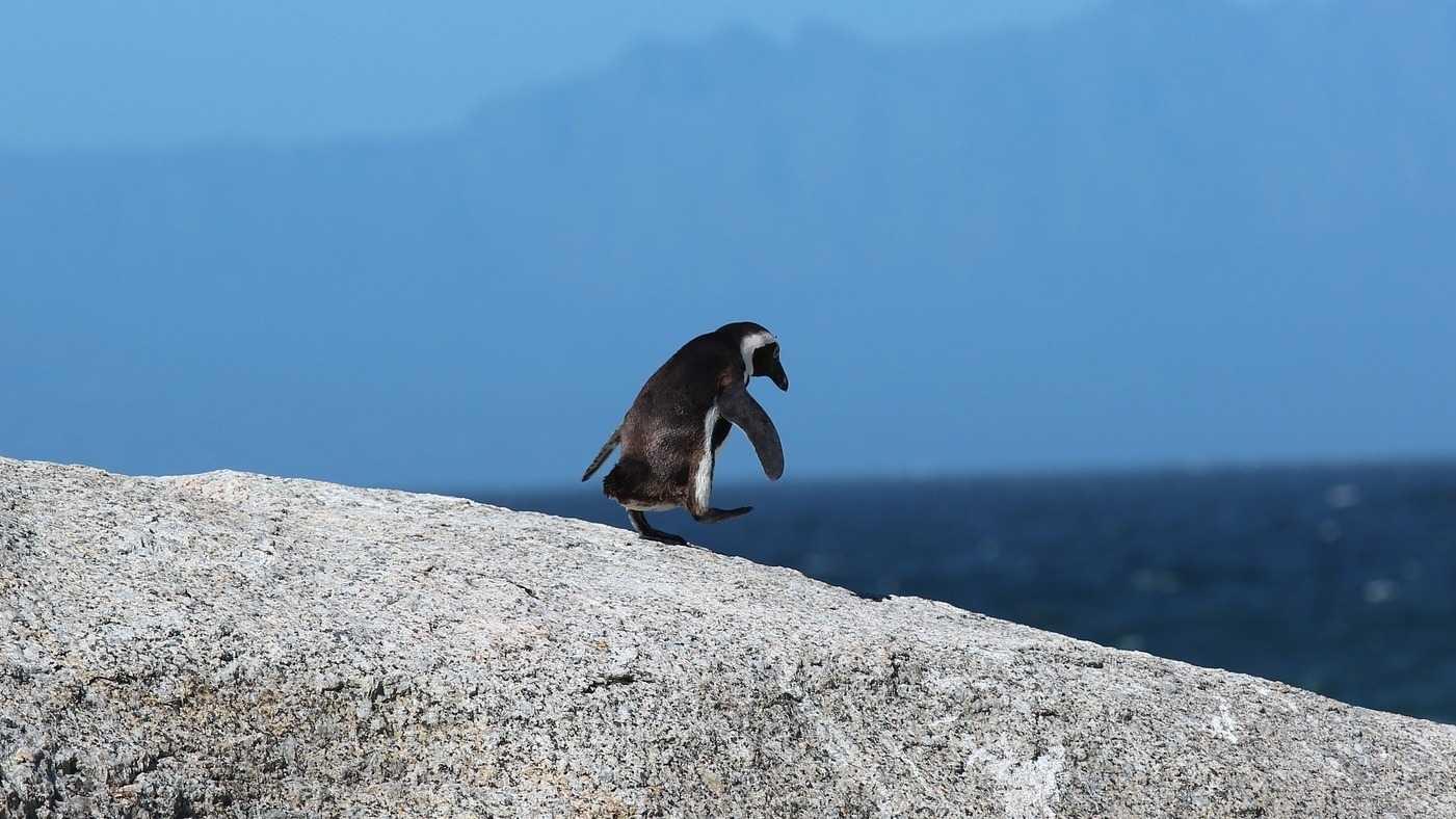 Qubes OS im Test: Linux sicher und nutzerfreundlich?