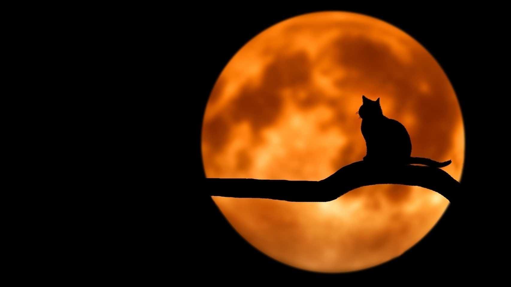 Sommer, Nacht, Sonne, Katzen