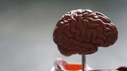 Gehirn steuert Rollstuhl