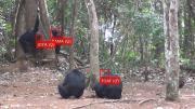 Gesichtserkennung für Affen