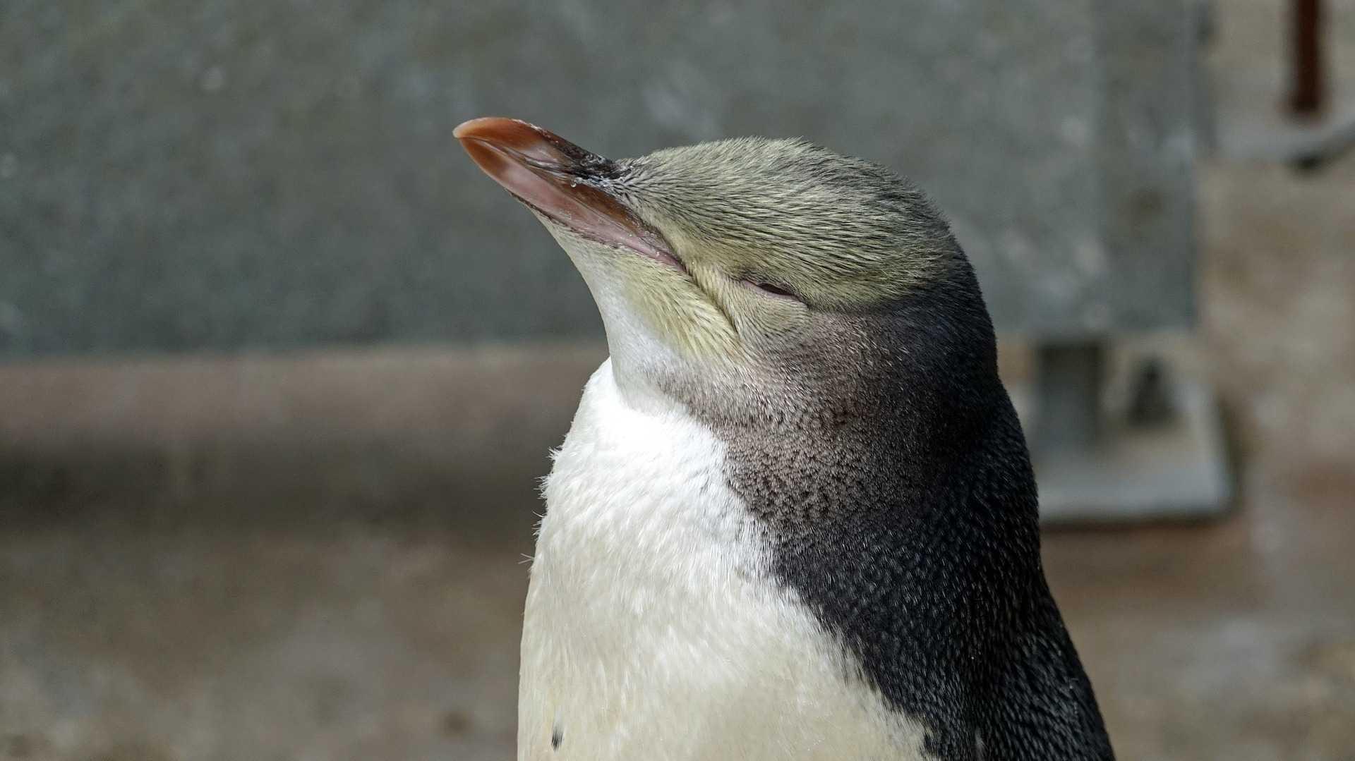 SolydXK 9: Linux für Kleinunternehmen und Non-Profit-Organisationen