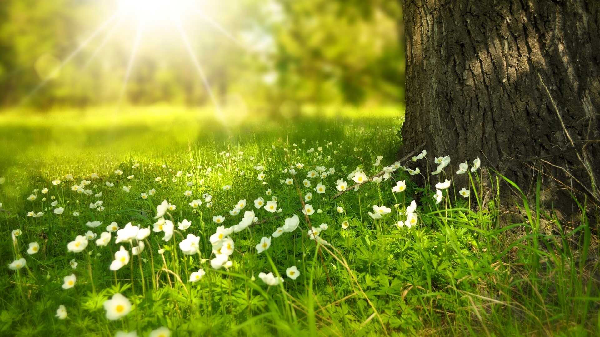 Spring Heise Online