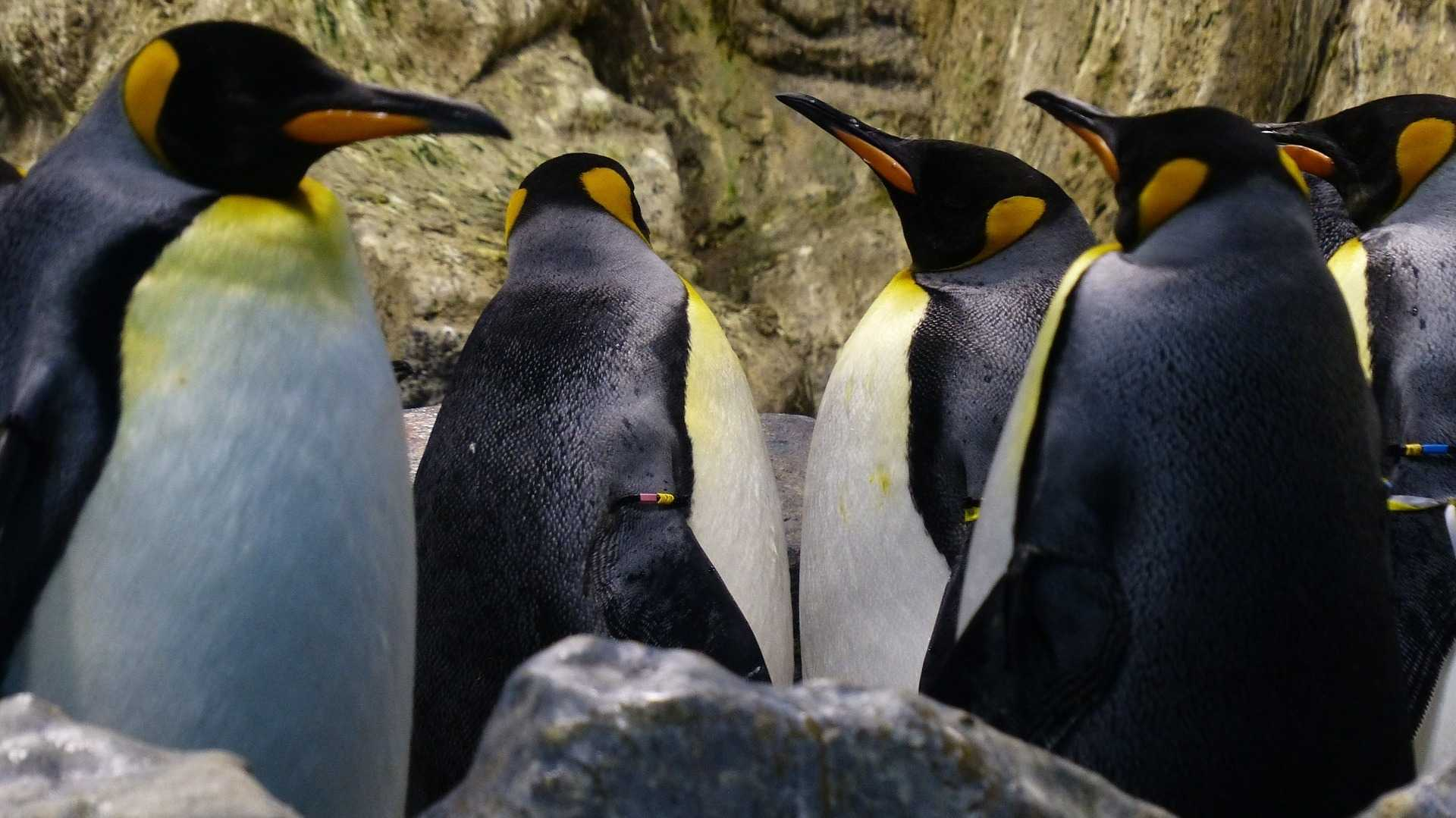 Linus Torvalds wieder am Ruder: Verhaltenskodex soll erstmal unverändet bleiben