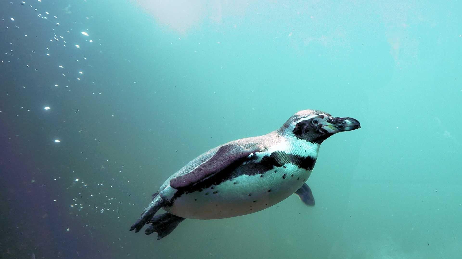 Linux: Besserer Spectre-V2-Schutz jetzt im Kernel