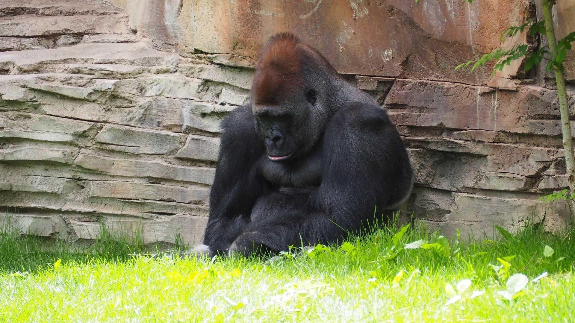 Microservice-API-Gateway: Kong 1.0 ist fertig
