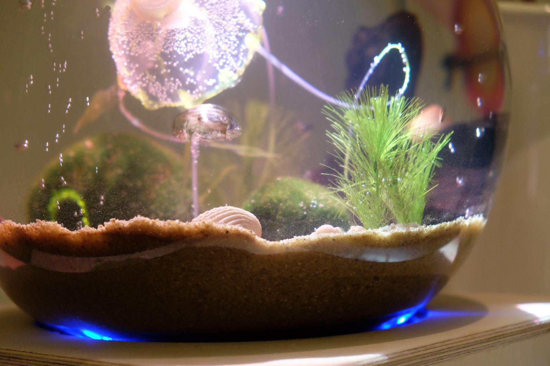 In einer Glaskugel sind Sand, Wasser und einige Pflanzen.