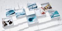 Bei diesem gerenderten Gruppenbild bekommen die sechs AutoCAD-Pakete Gesellschaft von der vor einer guten Woche vorgestellte Entertainment Creation Suite sowie dem Cloud-Angebot Autodesk 360.