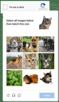 Süße Kätzchen: So könnte die Abfrage auf Mobilgeräten aussehen.