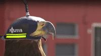 Drohnen, Adler