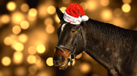 Vorsicht vor Phishing-Mails beim Weihnachtsshopping