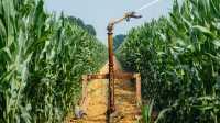 Künftig mehr Ernteertrag trotz weniger Wasser