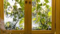 Besser Atmen dank Heimpflanze