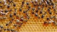 Internte der Dinge: HiveMQ wird Open Source