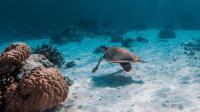 UN-Bericht: Menschheit tilgt die Natur von der Erde