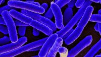 E. coli mit künstlichem Erbgut