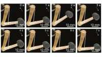 Künstliche Muskeln: Dünne Fasern mit großer Kraft