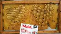 Bienen-IOT