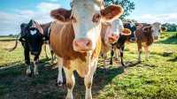 Biobauern verbrauchen noch zu große Flächen