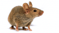 """""""Ein Werkzeug, um die Persönlichkeit von Mäusen zu erfassen"""""""