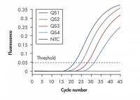 Nachweis per Fluoreszenz mit vier verschiedenen Reporter-Farbstoffen (QS1..4) und einer Nullprobe (NTC). Nach 40 bis 45 Zyklen ist man schon gut im sicheren Bereich