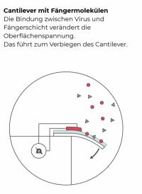 """Hochempfindliche MEMS-""""Federn"""" messen quasi das Gewicht der an den aufgetragenen Antikörpern angedockten SARS-CoV-2-Viren"""