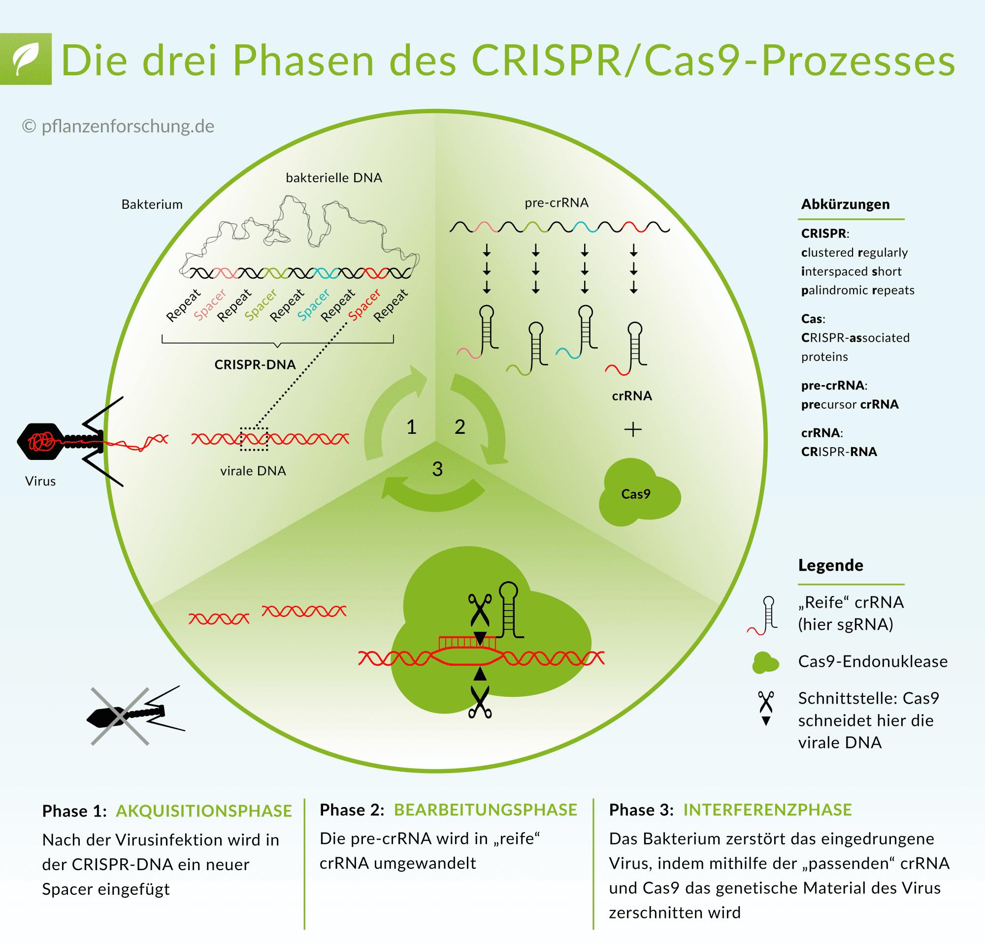 www.pflanzenforschung.de