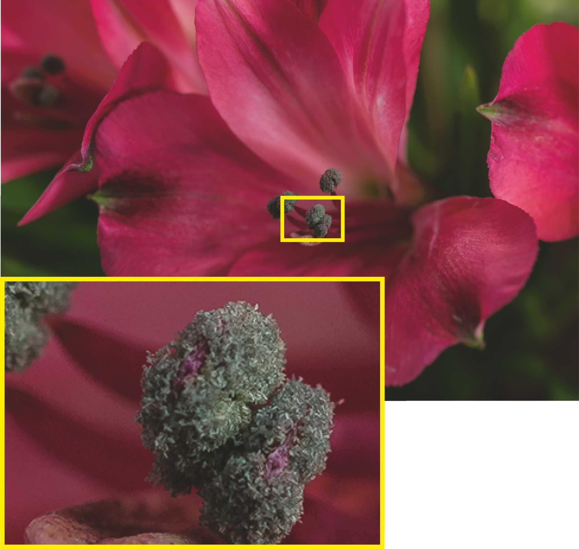 Nur mit hochwertigem Objektiv kann man die hohe Auflösung der D850 ausnutzen. <br /> (Nikon D850  Zeiss 100mm  ISO 64  f/5.6  6 s)