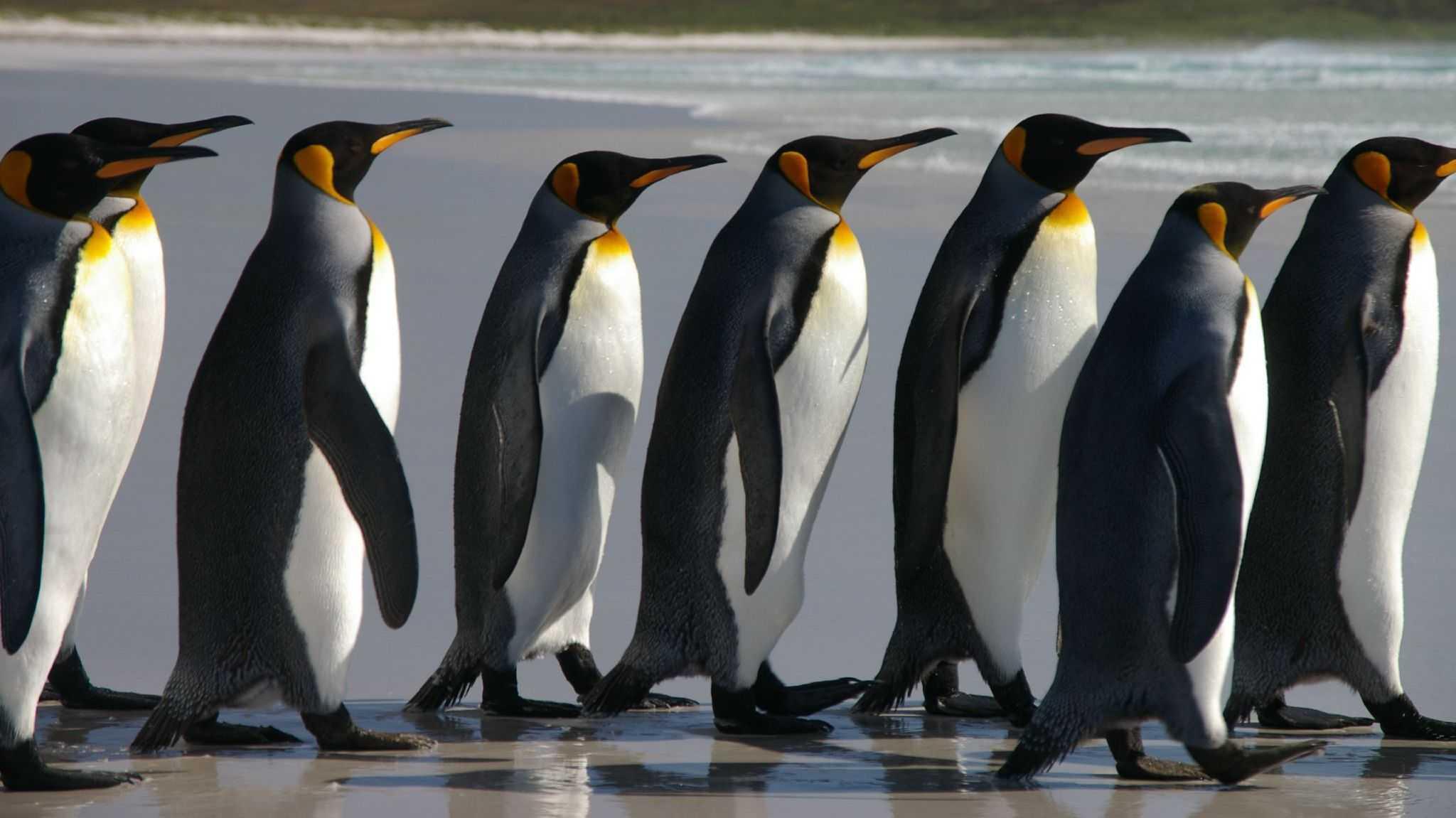 Linux Foundation: Stipendien-Gewinner und neuer Sicherheitskurs